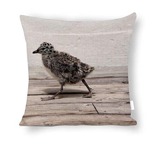 Dartys Pillow Cover Seagull-Chick-Bird-Fauna-Birds-ave-Animals-wingsBaumwolle und Leinen Pillowcase Klassische Mode Streifen Bunte 18x18zoll 45x45cm liebevollen Kissen Decken -