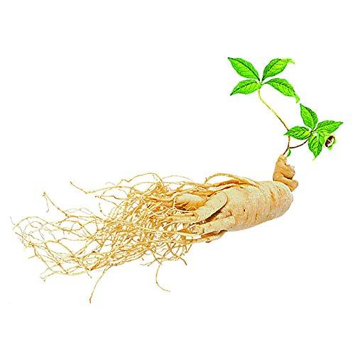 100% naturel 50 pcs/sac graines de ginseng chinois asiatique herbe Graines d'extérieur Accueil Agriculture Jardinage Plantation