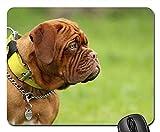 Gaming-Mauspads, Mäusematte, Bordeaux Mastiff Dog Animal Weiß De Mastiffs 1