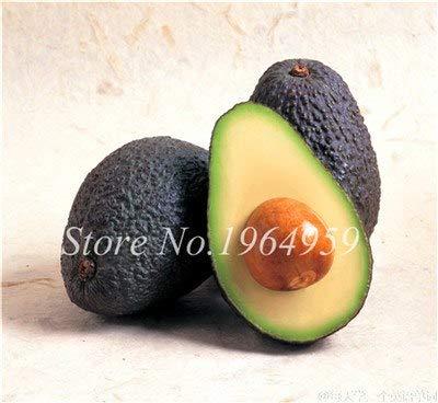 pinkdose 10 pezzi misti avocado semi delicious verde frutta persea americana mill pera alimenti seed facile da coltivare per la casa della pianta di giardino: 3