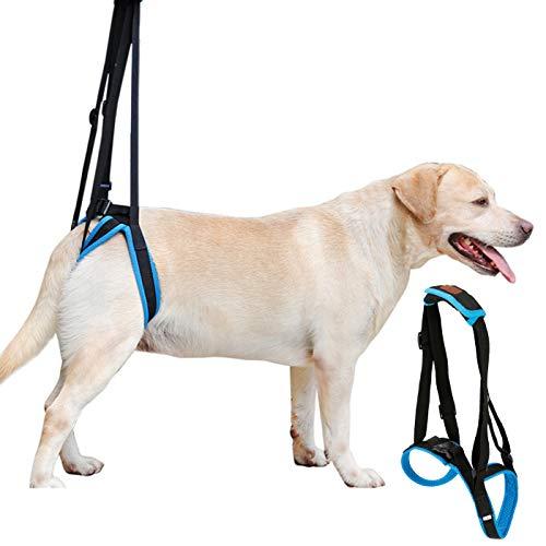 Alfie Petoga Couture Pet Hundegeschirr für Kalani-Unterstützung und Rehabilitation, Größe XL, Blau - Jacke-unterstützung