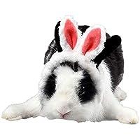 Sombrero de Oreja de Conejo, Sombrero Caliente para Mascotas, Gorro de Cerdo holandés, Chinchillas, Gorro de Gatito