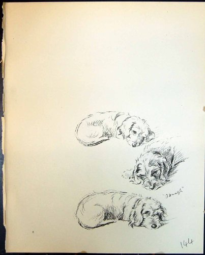 Stampa 1936 dell'Oggetto D'antiquariato di Lucy Dawson degli Animali dei Cani di Animale Domestico di Sonno di Oonagh Terrier