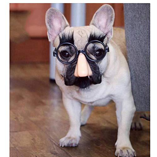 TOSSPER Talent/lustiger Hund Gläser Hundezubehör Tierbedarf Haustiere acessorios