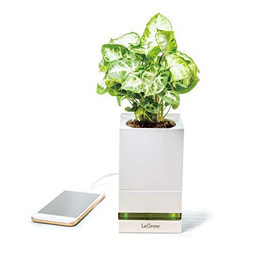 LeGrow Smart Garden- Vaso Intelligente - Coltivazione Indoor - idroponica Kit- Modello TG-P1 (Friendly Workplace - Quick Charger) con Base di Ricarica Integrato 4 Porte USB Quick Charger 3.0