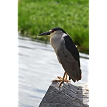 Black-Crowned Night Heron Journal: 150 Page Lined Notebook/Diary