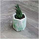 Paradox Hexagon Green Cement Planter/Vase / Flower Pot/Home Decor