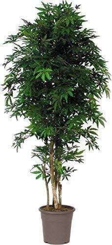 Newgreen acero verde - albero artificiale da arredo interno con tronco vero - alto 150 cm