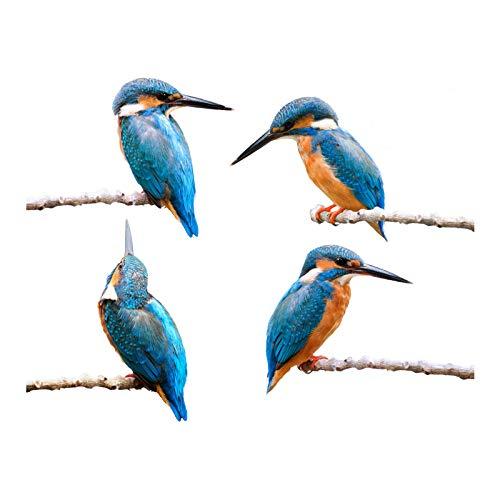 Stickers4 Vogel-Fensteraufkleber zum Schutz gegen Vogelschlag - Vier schöne Eisvögel-Glasaufkleber, doppelseitig und selbstklebend zum Schutz gegen Vogelkollisionen