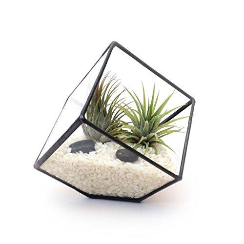 Cube petit Terrarium en verre géométrique Moderne Fleurs Jardinage intérieur Fait main par loveglass, Verre, noir, 13x15x15