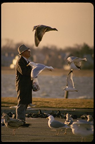 628044 Seagulls And Sunset A4 Photo Poster Print 10x8