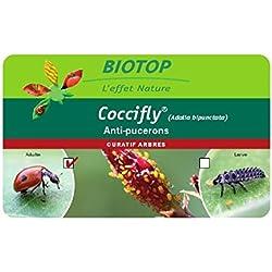 Larves de coccinelle à deux points Coccifly Ⓡ - 50 larves de coccinelles