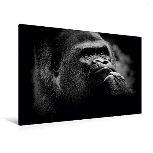 Calvendo Premium Textil-Leinwand 120 x 80 cm Quer-Format Gorilla | Wandbild, HD-Bild auf Keilrahmen, Fertigbild auf hochwertigem Vlies, Leinwanddruck von Ulrich Brodde Tiere Tiere