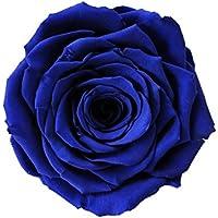 ETERNAL ROSES, XXL Rosenkopf, konserviert; Farbe Blue