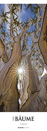 Bäume 2020 - Trees - Wald - Streifenkalender XXL (25 x 69) - Landschaftskalender - Naturkalender - Bildkalender - Wandkalender