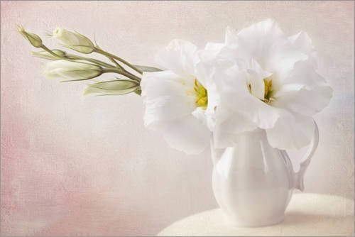 Posterlounge Leinwandbild 180 x 120 cm: Weiße Blüten von Elena Schweitzer - fertiges Wandbild, Bild auf Keilrahmen, Fertigbild auf echter Leinwand, Leinwanddruck