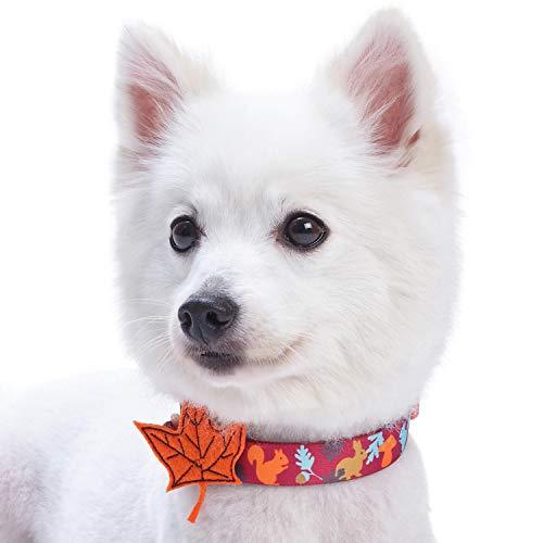 Blueberry Pet Herbst Spaß Bezauberndes Eichhörnchen Designer Hundehalsband mit Deko, Hals 30cm-40cm, S, Festtags-Halsbänder für Hunde -