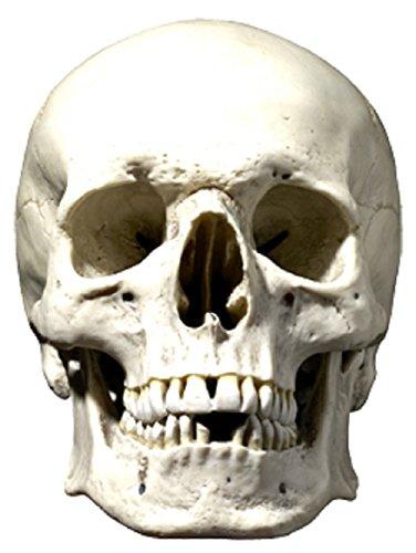Star Cutouts Bedruckte Maske des Totenkopf-Maske -