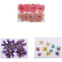 Sharplace 30 Stück Gemischte Farbe Gepresste Getrocknete Blüten von Sakura Alcea Rosea Ammi Majus