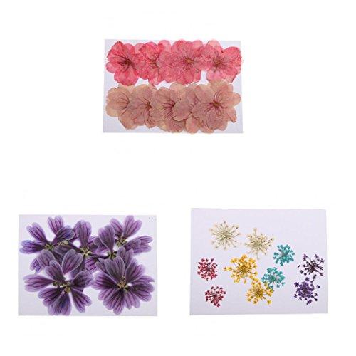 Descripción: - Las flores prensadas son flores secas reales y selladas herméticamente; - Formas y colores de flores bien conservadas; - Excelente material para proyectos de bricolaje - Perfecto para marcadores hechos a mano, ál...