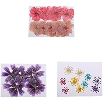 sharplace 30 stück gemischte farbe gepresste getrocknete blüten