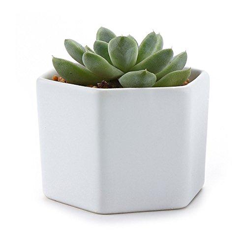 t4u-vaso-per-piante-da-7-cm-in-ceramica-esagonale-contenitore-bianco-opaco-searial-1-1