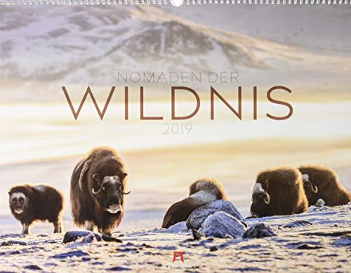 Nomaden der Wildnis 2019, Wandkalender im Querformat (54x42 cm) - Tierkalender mit Monatskalendarium