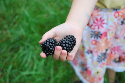 Brombeeren Samen (Riesen Brombeeren / ca. 50 Samen / hoher Vitamingehalt / Kalorienarm)