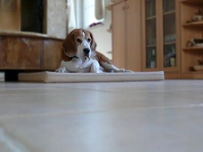 Marley ortopédico imitación piel perro alfombrilla 90x 120x 7cm), color crudo