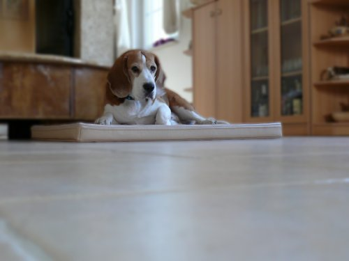 Bild: MARLEY  Ortho Orthopädische Hundematte Kunstleder Hundebett Matratze 90x120x7cm ECRU