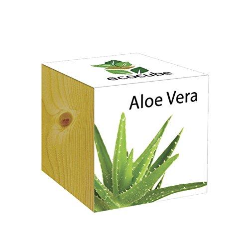 Extragifts ecocube Aloe Vera - piante nel cubo di legno