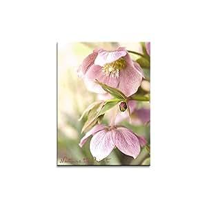 Blumen wandbild lenzrosen romanze hochformat als leinwandbild im keilrahmen im format 100cm x - Wandbild hochformat ...