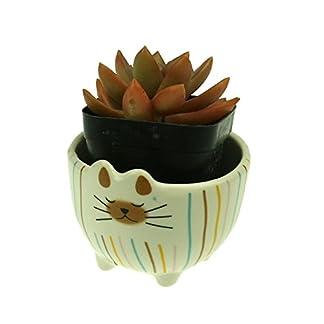 Magic Show Maceta de Gato siamés de cerámica Tazón de Gato siamés Decorada con Rayas de Color