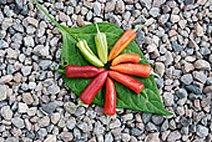 Just Seed Gemüse Chili/Chilli Fish Pepper 10 Samen