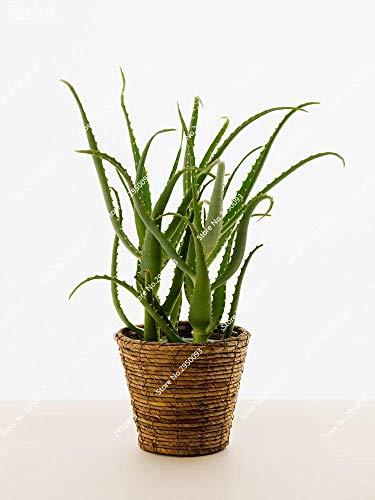 Vistaric 100 pz di alta qualità verde pianta aloe vera semi di erbe rare semi di albero bonsai piante da interno per esterni per la casa e giardino 2