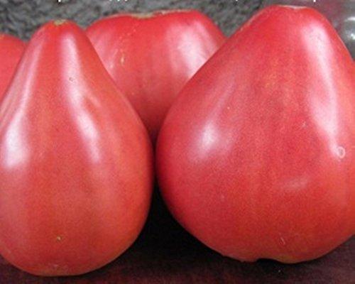 Coeur rose Graines de tomate Batyanya culture biologique Heirloom NON-OGM