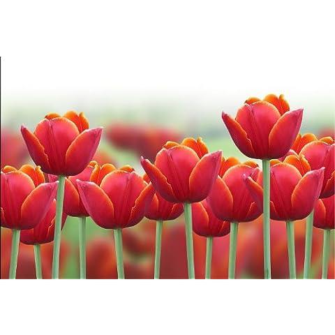 Startonight, nachtleuchtendes tela Rossi Tulipani, 90 cm x 60 cm