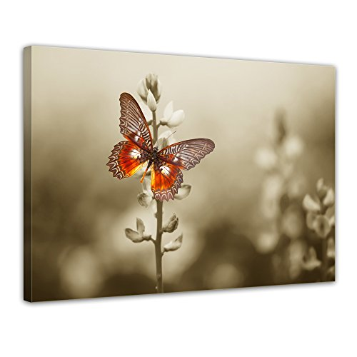bilderdepot24-wall-art-canvas-picture-red-butterfly-on-a-dark-field-1575-inch-x-1181-inch-gallery-wr