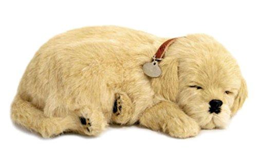 Perfect Petzzz Golden Retriever il cucciolo che respira the Breathing Puppy