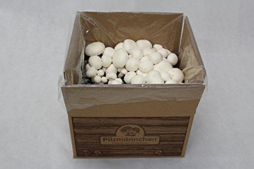 XXL Bio Champignon Pilzzuchtset – Pilze selber züchten