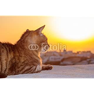 Cat Watching The Sunset In Oia, Santorini (71467746), Poster, 110 x 70 cm
