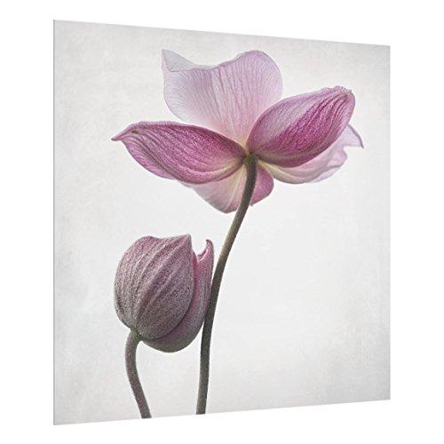 Bilderwelten Spritzschutz Glas - Anemonen in rosa - Quadrat 1:1, HxB: 59cm x 60cm -