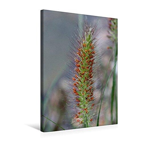 Premium Textil-Leinwand 50 cm x 75 cm hoch, Ein Motiv aus dem Kalender Wilde Gräser/Geburtstagskalender   Wandbild, Bild auf Keilrahmen, Fertigbild Leinwand, Leinwanddruck (CALVENDO Natur)