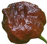 Trinidad Moruga Scorpion chocolate -20 Samen/chocolate Variante - eines der schärfstes Chili der Welt !
