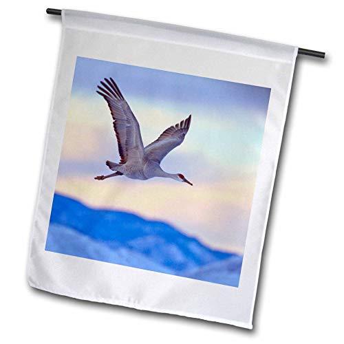 3dRose FL_145153_1 USA, New Mexiko, Sandhill Kran, Vögel fliegen Jaynes Gallery, 30,5 x 45,7 cm -