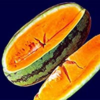 PlenTree Orangeglo Sandãa 20 Semillas-Tropical Tang ponche de Frutas