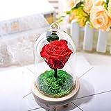 TATVT Fleur éternelle Rose Fleurs Décorations en Verre Partiellement avec Veilleuses Anniversaire Cadeaux Bouquet d'amoureux du Jour des Enseignants Cadeau @ F Décorations De Vacances Élégantes