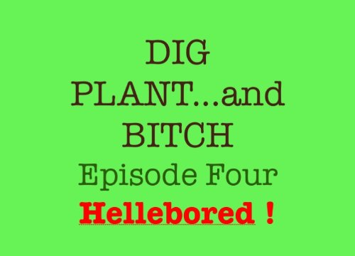 hellebored-dig-plant-and-bitch-the-soap-opera-for-gardeners-book-4-english-edition