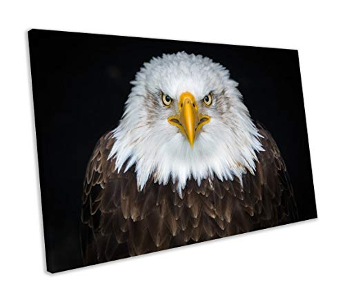 lmf379581 Canvas Print Bald Eagle Animal Framed Ready to Hang Bedroom Bathroom Decoration Wall Art Wall Decor - Bald Eagle Artwork