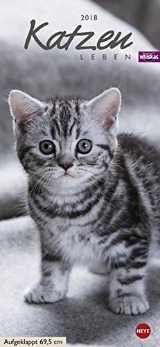 whiskas-katzenleben-2018-mit-katzengeschichten